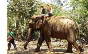 Esmee Kappers olifant